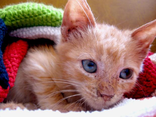 allons chat sites «il nous faudra faire nos réserves de nourriture pour l'hiver,» dit le chat, «sinon  nous risquons de mourir de faim toi, ma petite souris, tu ne peux pas aller.