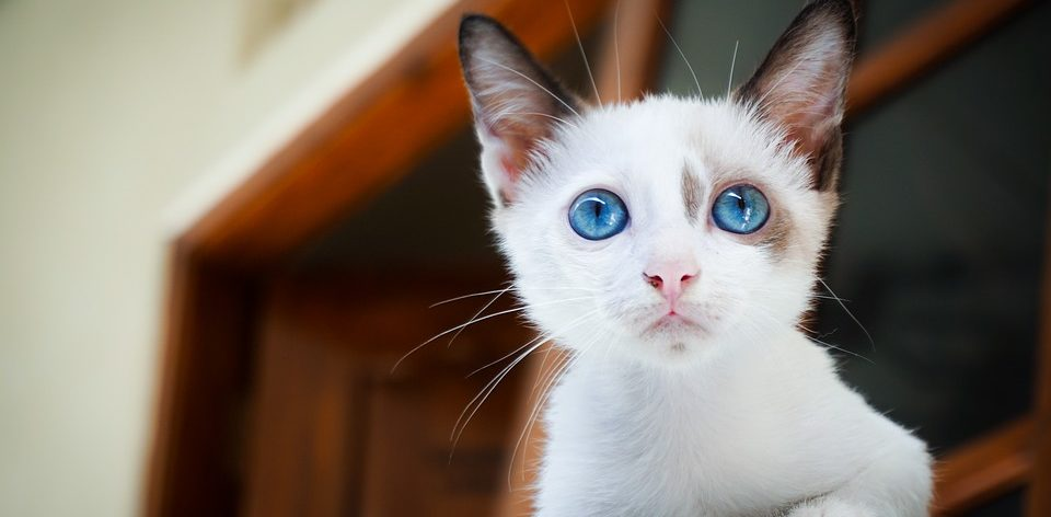 25897944be480e Le site de l alimentation féline et des chats - Croquettes pour chat